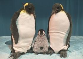 Bild: Pit Pinguin - marotte-Figurentheater
