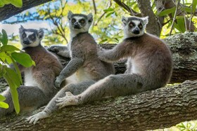 Bild: Klaus Fleischmann: Madagaskar