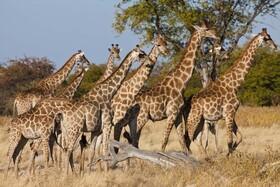 Namibia - Mythos südliches Afrika - von Reiner Harscher