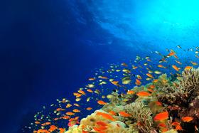 Bild: Rotes Meer - Schätze des Meeres, Schätze des Landes
