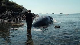 Bild: The Whale & the Raven (engl. OmU) - Sondervorstellung mit einem Glas Sekt und Gästen