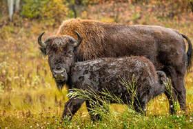 Bild: Kanada & Alaska