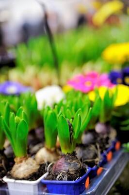 Bild: Garten - Frühling - Lebensart Gießen - Tagesticket