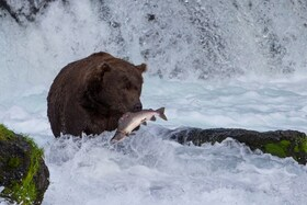 Bild: Saar-Pfalz-Lichtblicke: Kanada & Alaska