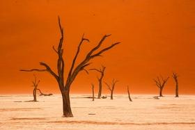 Bild: Traumhaftes Namibia - von und mit Andreas Huber
