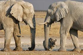 Bild: Namibia