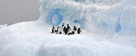 Reiseporträt Antarktis