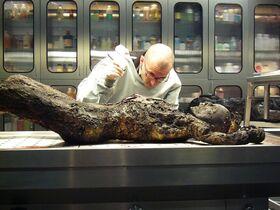 Bild: Dr. Mark Benecke - Mumien von Palermo