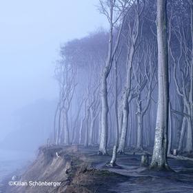 Multivisionsshows Umweltfotofestival »horizonte zingst« 2020 - Kilian Schönberger – Waldwelten: das geheimnisvolle Reich der Bäume