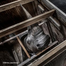 Multivisionsshows Umweltfotofestival »horizonte zingst« 2020 - Britta Jaschinsky – Mit großem Engagement zum Wohl der Tiere