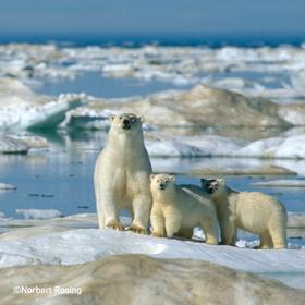 Multivisionsshows Umweltfotofestival »horizonte zingst« 2020 - Norbert Rosing – 30 Jahre Naturfotografie