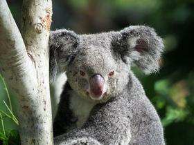 Bild: Australien (Vortrag)