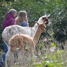 Bild: Alpakas im Park