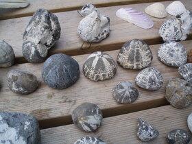 Bild: Fossilienwanderung - Fossilienwanderung
