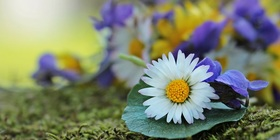 Bild: GartenAbendFührung - Weißt Du wie der Frühling schmeckt?