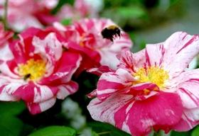 Bild: Gartenseminar - Frauenkräuter: Frauen und Kräuter