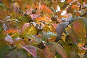 Bild: KreAktiver Samstag - EssBAR Herbstlandschaften: Beerenstark in den Winter
