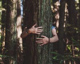 Bild: Natur als Medizin - Waldcoaching - Der heilsame Nutzen von Bäumen auf den Menschen