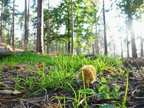 Bild: Waldbaden - Achtsamkeit im Wald Variante 1 - Wanderung