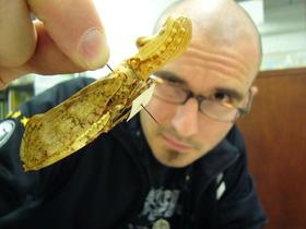 Bild: Dr. Mark Benecke - Insekten auf Leichen