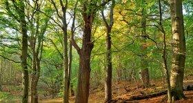 Winterzeitkino - Das geheime Leben der Bäume