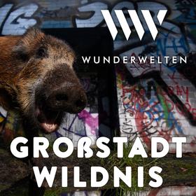 WunderWelten: Großstadt Wildnis