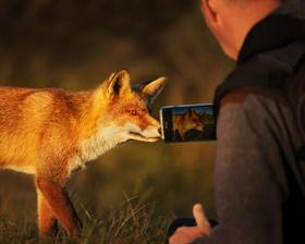 Bild: Monday biodivers: Wildtiere in der Stadt