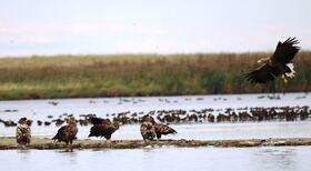 Bild: Ornithologische Führungen mit Friedemann Bartz - Adler-Safari
