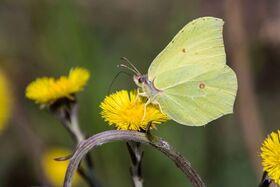 Bild: Darßer NaturfilmFestival: Rettet die Insekten