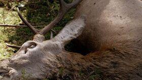 Bild: Darßer NaturfilmFestival: Festmahl der Tiere
