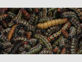 Bild: Caterpillars