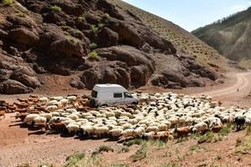 Bild: Vanlife – Leben als moderne Nomaden
