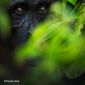 Bild: Borneo – Spuren eines Paradieses