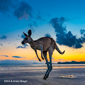 Bild: Australien – ein Jahr Freiheit