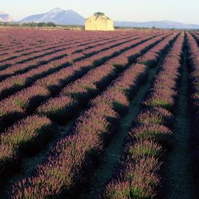 Bild: Provence und Cote d´Azur