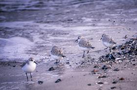 Strand- und Waldwanderung: Meeresrauschen und Waldgeflüster