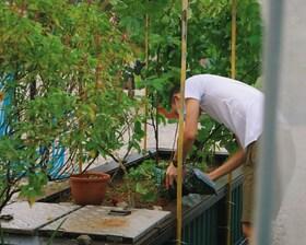 Urban Farming - Berlin wird grüner