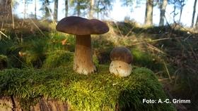 Geführte Kräuter- und Pilzwanderung