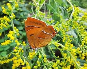 Bild: Käfer und Fliegen - mehr als Marienkäfer und Stubenfliege