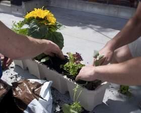 Bild: Ab ins Beet! Den Garten mit Pflanzen bestücken - Workshop im Urania Garten