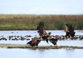 Bild: Ornithologische Führungen mit Friedemann Bartz - Wanderung am Boddendeich Zingst