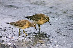 Bild: Ornithologische Führungen mit Friedemann Bartz - Ornithologische Führung mit Blick auf Barther Oie