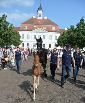 Bild: Jubiläumsfest - 20 Jahre Stiftung Brandenburgisches Haupt- & Landgestüt - Tagesprogramm - Menschen, Pferde, Musik