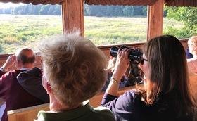 Bild: Hirschkonzerte im Darßwald / Kutschexkursion