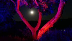 Bild: Loreley bei Nacht - Literarischer Rundgang mit musikalischer Darbietung am 02. Oktober