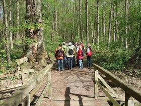 Bild: Geführte Erlebniswanderungen - Tour durch den Bad Rappenauer Stadtwald ca. 7 km