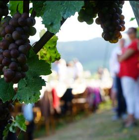 Bild: tafelVINE im Schloßgut Ebringen - tafelvine Sommerevent 2022