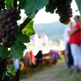 Bild: tafelVINE im Weingut Weber - tafelvine Sommerevent 2022
