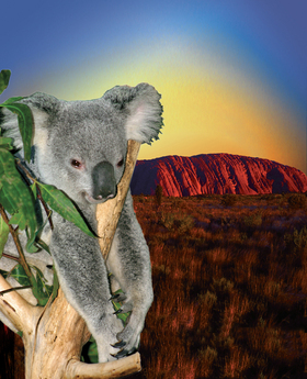 Bild: Abenteuer Australien - Foto & Filmreportage