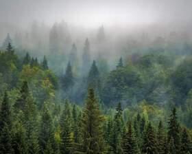 Bild: Unsere Wälder und der Klimawandel - Was können wir gegen das Waldsterben tun?